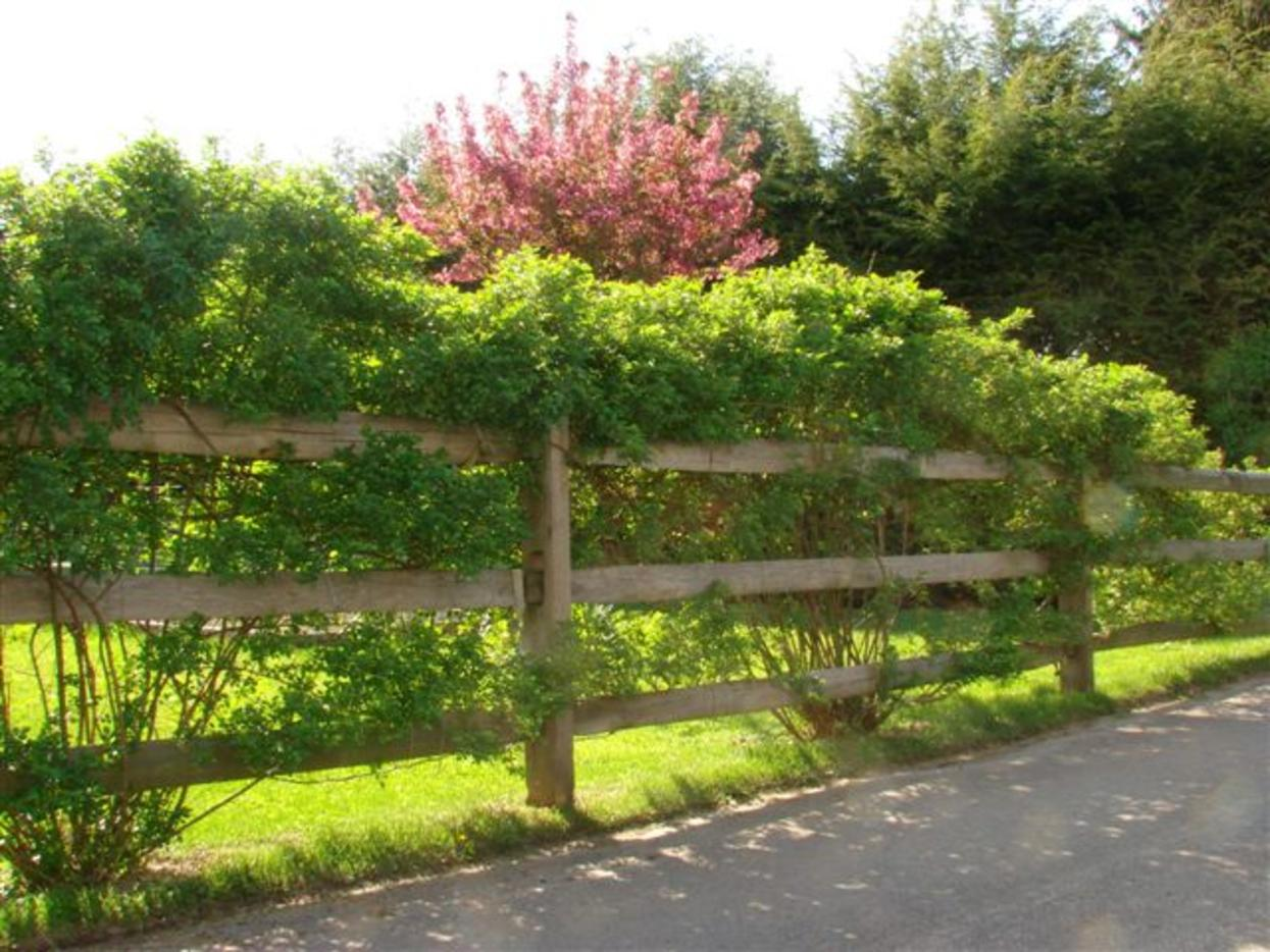 Split Rail in Landscaping